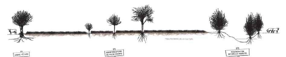 Agroforesterie, enjeux et perspectives agro-écologiques!